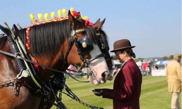 heavy-horses-1