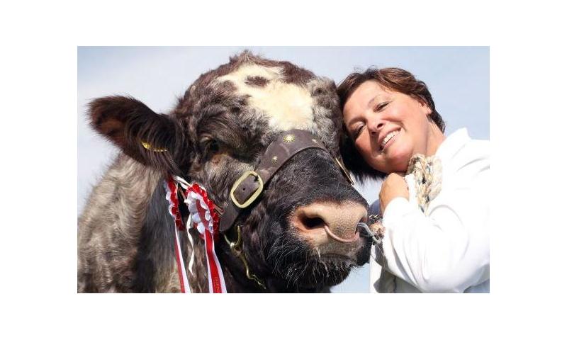happy-cow
